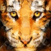 picture of tiger cub  - Artwork of tiger cub head from front view - JPG