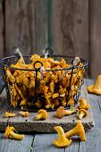 picture of chanterelle mushroom  - Forest chanterelle mushrooms in a iron basket