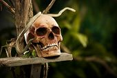 stock photo of jungle snake  - Old ruined skull with snake and wild jungle in the background - JPG