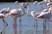 FLAMINGOS FORM A HEART SHAPE