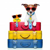 foto of carry-on luggage  - dog traveling with yellow plastic duck on top of luggage stack - JPG