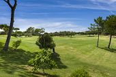 picture of vilamoura  - Golf field in the Vilamoura Portugal during sunny day - JPG