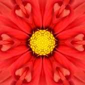image of kaleidoscope  - Red Mandala Concentric Dahlia Flower Kaleidoscope with Yellow Center - JPG