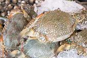 pic of blue crab  - Fresh raw flower crab or blue crab in sedfood market  - JPG