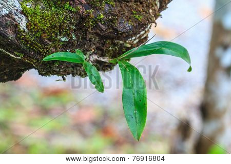 Orchid In Forest