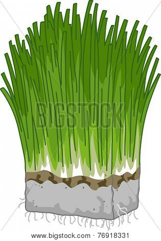 Illustration Featuring a Block of Wheatgrass