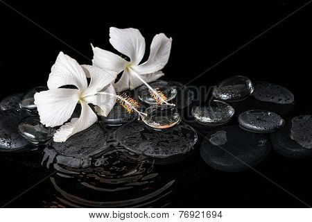 Beautiful Cryogenic Spa Concept Of Delicate White Hibiscus, Zen Stones With Drops And Ice On Ripple