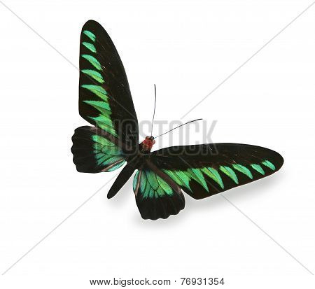 Green And Black Butterfly Isolated On White