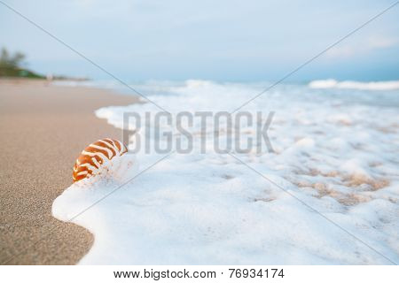 nautilus shell with sea wave,  Florida beach  under the sun light, live action