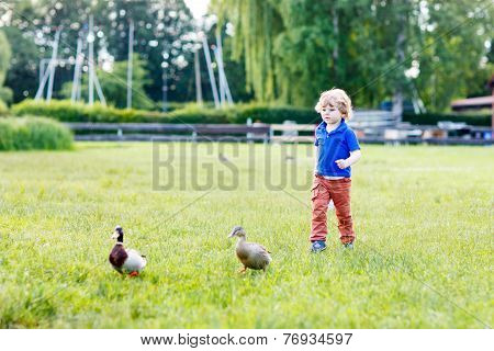 Funny Toddler Boy Chasing Wild Ducks In A Park