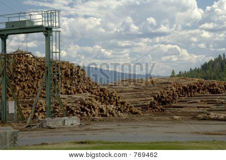 Log Yard 1