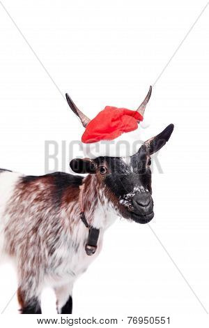 Portrait Of dwarf Goat in christmas hat On White