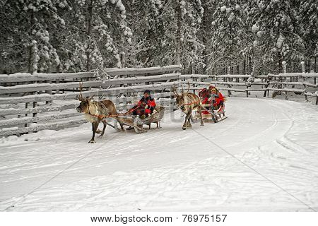 Racing On The Reindeer Sledges