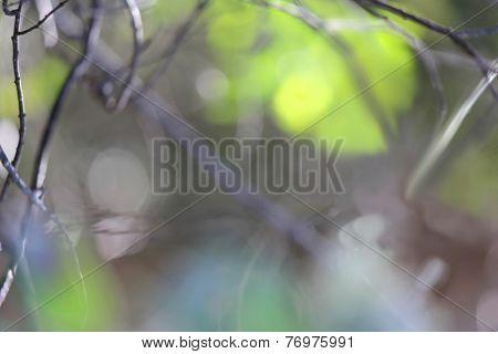 Soft Focus Forest Background