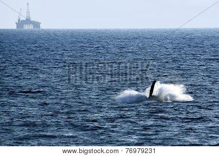 whales dive