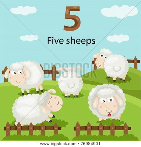 Illustrator of number five sheeps