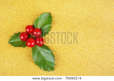 European Holly (Ilex aquifolium) with berries on yellow background