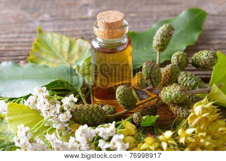 Pure herbal essential oil in glass bottle on woden desk with ginkgo leaf and alder cones