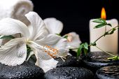 pic of tendril  - spa concept of blooming delicate white hibiscus green twig with tendril passionflower with drops on zen basalt stones closeup - JPG
