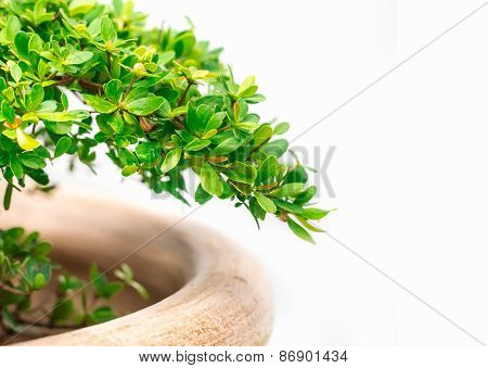 Green Plant In The Pot Isolated