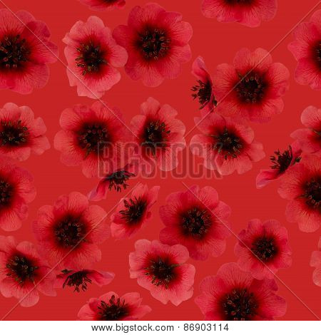 Red Cinquefoil Seamless Pattern