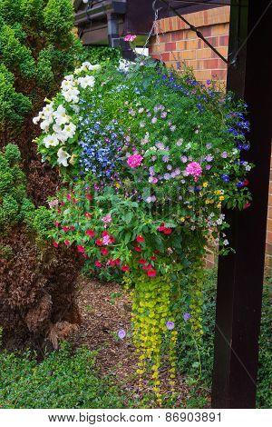 Hanging Basket Full Of Colorful Summer Plants.