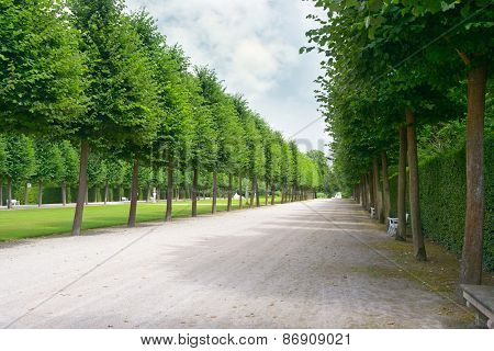 Tall trees along the footpath in park