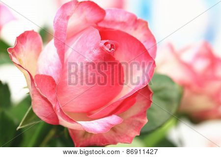 Pink with yellow roses