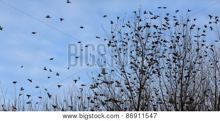 Fall - Flock Of Birds Migrating South