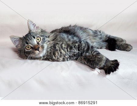 Fluffy Tabby Siberian Kitten Lying On Brown
