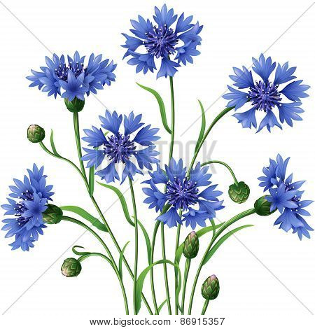 Bunch Of Blue Cornflowers