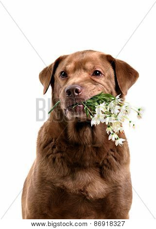 Dog Holding Flowers