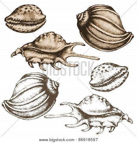 Hand Drawn Seashells