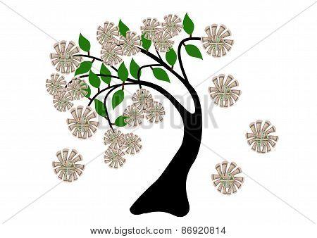 Money Flowers On Tree
