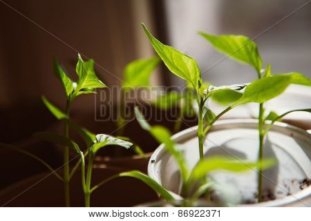 Agriculture, Seeding, Plant Seed Growing Concept