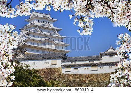 Himeji Castle During Cherry Blossom Time