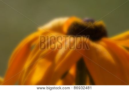 Blurred Seasonal Sunflower With Defocssued Background