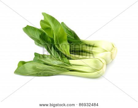 Fresh Chinese Cabbage Or Bok Choy On White Background