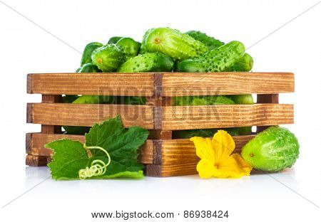 Fresh cucumbers in wooden box with green leaf and flower. Isolated on white background