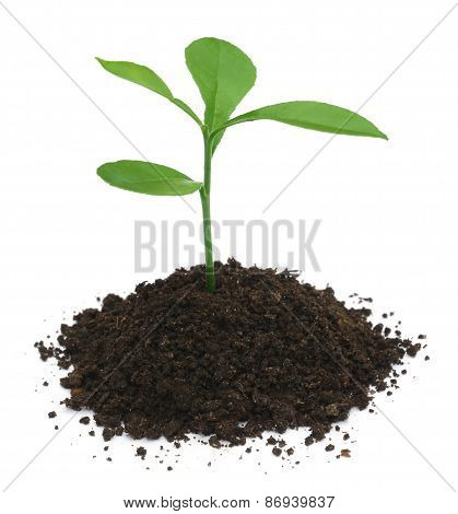 Plant In Fertile Soil