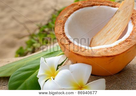 Ripe coconut on the beach