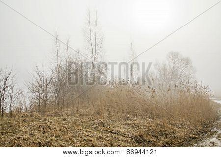 Fog In Fields In Autumn