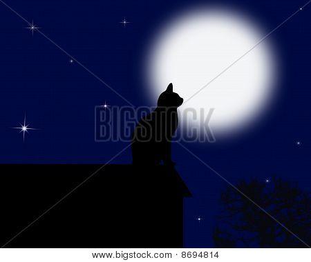 gato da lua