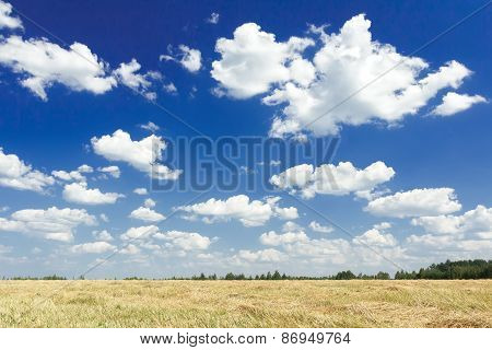 Cumulus On Aero Blue Sky Above Harvested Grain Goldenrod Color Field