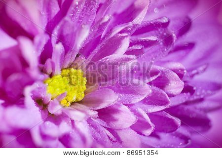 Extreme Macro: Petals Of Pink Dahlia Used As Background