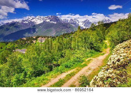 Alpine Meadows In The Caucasus Mountains.
