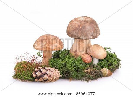 Some Mushrooms With Cones And Acorns