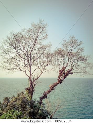 Dry Branch Tree On The Coast