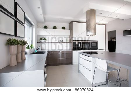 Houseplants In Exclusive Kitchen