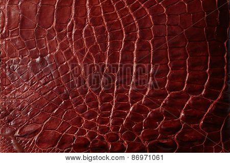 Alligator patterned background